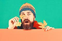 Ideia do tempo dos outubro e novembro O homem guarda as folhas da árvore de bordo fotografia de stock