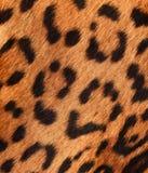 Detalhe de uma pele do jaguar Fotos de Stock Royalty Free
