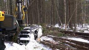 Ideia do trabalho ocupado do carregador do log na floresta vídeos de arquivo
