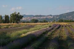Ideia do verão do campo da alfazema perto de Assisi em Úmbria foto de stock royalty free