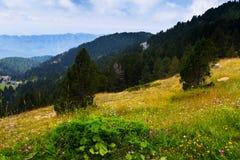 Ideia do verão da paisagem das montanhas da floresta Imagens de Stock