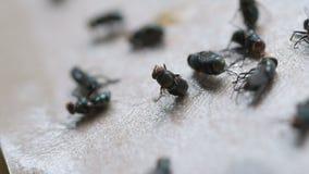 A ideia dramática da morte da mosca colou ao papel da vara filme