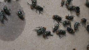 A ideia dramática da morte da mosca colou ao papel da vara video estoque