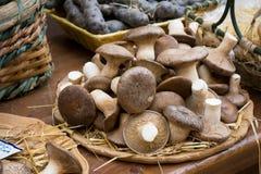 Ideia horizontal do fim acima de cogumelos frescos no Marketplac foto de stock
