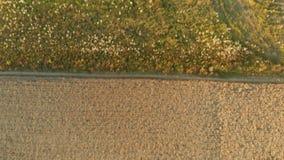 Ideia invertido a?rea do campo arado durante o por do sol vídeos de arquivo