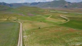 ideia 4k aérea da florescência famosa em Castelluccio di Norcia, Itália vídeos de arquivo