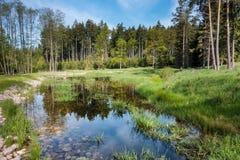 Ideia lindo da floresta da vida ainda com lagoa Imagem de Stock Royalty Free