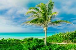 a ideia lindo da paisagem natural da ilha de Santa Maria do cubano, um trajeto, a passagem à praia e a turquesa tranquilo oferece fotografia de stock royalty free