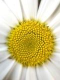 Ideia macro do centro de uma flor Fotografia de Stock