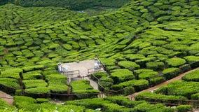 Ideia majestosa da paisagem da plantação de chá de Cameron Highlands Pahang Malaysia imagens de stock royalty free