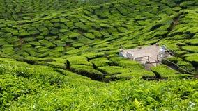 Ideia majestosa da paisagem da plantação de chá de Cameron Highlands Pahang Malaysia imagens de stock