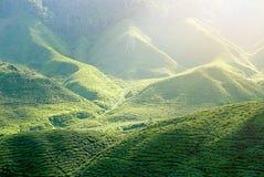 Ideia majestosa da paisagem da plantação de chá de Cameron Highlands Pahang Malaysia Fundo ou contexto da natureza ou da agricult imagem de stock royalty free