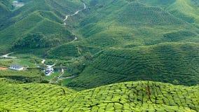 Ideia majestosa da paisagem da plantação de chá de Cameron Highlands Pahang Malaysia Fundo ou contexto da natureza ou da agricult fotografia de stock