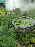 ideia para a natureza no jardim Imagem de Stock Royalty Free