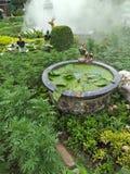 ideia para a natureza no jardim Fotografia de Stock