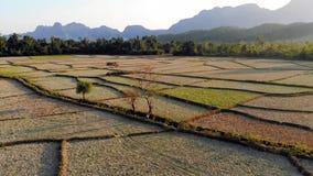 Ideia a?rea de campos de explora??o agr?cola e de forma??es de rocha em Vang Vieng, Laos Vang Vieng é um destino popular para a a video estoque