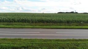 Ideia a?rea de um campo de milho verde Estrada asfaltada vazia do carro através dos campos de milho vídeos de arquivo