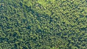 Ideia superior aérea da paisagem da floresta de cima de, fundo da natureza dos pinheiros Fotografia de Stock
