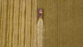 A ideia superior aérea de cima da ceifeira de liga recolhe o trigo no por do sol Colhendo o campo de grão, estação da colheita 4K vídeos de arquivo
