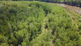 Ideia superior da área verde da floresta com o rio atual no verão grampo Um lugar excelente para o turismo ecologically video estoque