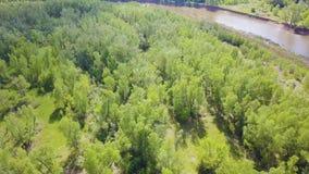 Ideia superior da área verde da floresta com o rio atual no verão grampo Um lugar excelente para o turismo ecologically filme