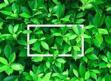 Ideia superior da disposição criativa feita folhas Fotos de Stock