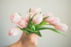 Ideia superior da mão do ` s do homem que guarda o ramalhete de tulipas cor-de-rosa delicadas no fundo branco Imagens de Stock