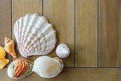 Ideia superior de escudos diferentes do mar no fundo de madeira com espa?o da c?pia Conceito das horas de ver?o fotografia de stock
