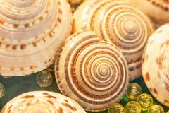 Ideia superior de escudos espirais exóticos do mar com mármores das bolas de cristal no veludo verde Bokeh bonito e fundos borrad imagens de stock