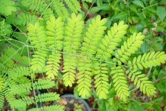 Ideia superior de leaaves verdes frescos no fundo borrado foto de stock