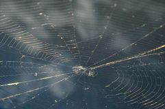 Ideia superior de um spiderweb na frente de um céu azul da manhã Imagem de Stock Royalty Free