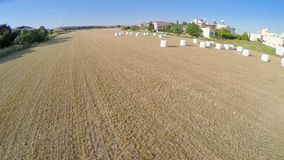 Ideia superior do campo colhido infinito Tiro aéreo da terra de cultivo agricultura video estoque