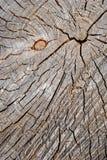Ideia superior do coto velho usada como um assento de descanso Textura de madeira imagem de stock