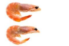 Ideia superior do fundo isolado camarão foto de stock
