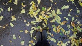 A ideia superior dos pés está na poça entre as folhas amarelas filme