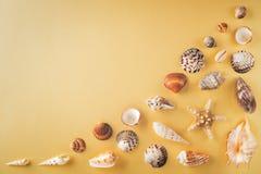 Ideia superior dos shell na tabela amarela Conceito das férias do curso Sonho sobre férias em uma praia tropical Tropi da decoraç Fotos de Stock Royalty Free