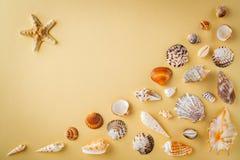 Ideia superior dos shell na tabela amarela Conceito das férias do curso Sonho sobre férias em uma praia tropical Tropi da decoraç Foto de Stock