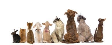 Ideia traseira de um grupo de animais de estimação, cães, gatos, coelho, sentando-se