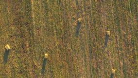 Ideia video aérea do zangão 4k de um campo verde com monte de feno redondos, pacotes de feno secados filme