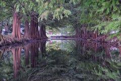 Ideias das árvores e dos aspectos originais da natureza que cercam Nova Orleães, incluindo associações refletindo nos cemitérios  fotografia de stock