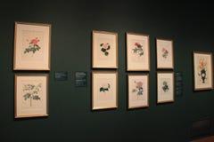 Ideias impressionantes de partes florais quadro, Cleveland Art Museum, Ohio, 2016 Imagem de Stock Royalty Free