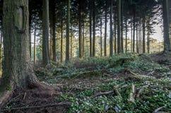 Ideless woods near truro, england uk Royalty Free Stock Photos