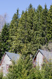 Identical cottages surrounded by trees Royalty Free Stock Photos