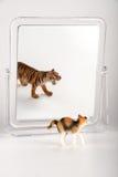 Identidade do gato Imagens de Stock Royalty Free