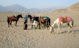 Identificación: 115478172 hombres del desierto fotografía de archivo