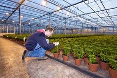 Identificando plantas Imagens de Stock Royalty Free