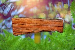 Identifichi gli alberi e la pianta verdi di legno della foglia fotografia stock
