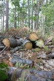 Identifiez-vous coupés la forêt images libres de droits