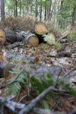 Identifiez-vous coupés la forêt photo stock