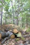 Identifiez-vous coupés la forêt photos stock